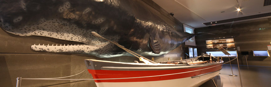 Permanent Exhibitions at the Whale Museum